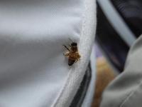 Bags of pollen