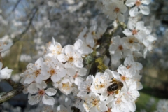 Early pollen collection