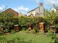 last summer in my garden