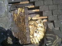 Bees in roof 3