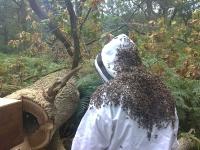 oak tree bees