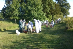 The Lydney apiary